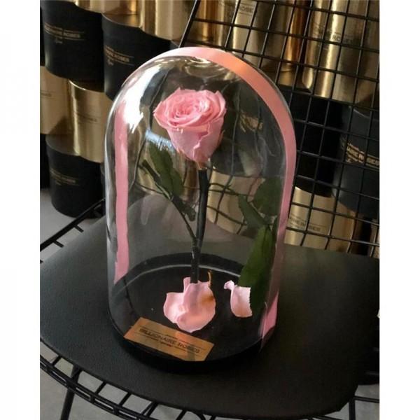 Cam Fanusta Solmayan Pembe Gül Billionaire Roses