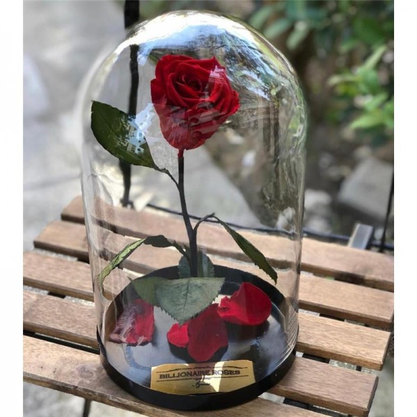 Cam Fanusta Solmayan Kırmızı Gül Billionaire Roses
